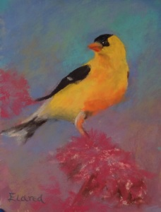 Goldfinch on Thistle #1 6 by 8 Pastel on Paper